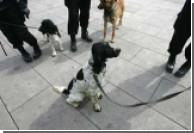 Тайская полиция вербует домашних собак