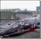 Миллиардерша заплатит за гибель беременного кита
