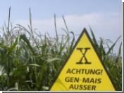 Во Франции полностью запретили генетически модифицированное зерно