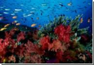 Исчезновение коралловых рифов напрямую связано с деятельнотью человека