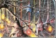 Нервные ткани восстановят с помощью волос