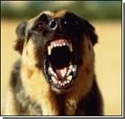 Бешеный пес откусил хозяину голову