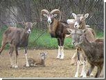 Бродячие собаки загрызли 15 обитателей софийского зоопарка