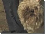 Пропавший пять лет назад пес нашел дорогу к новому дому своей хозяйки