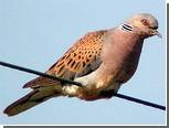Вслед за США и Швецией массовая гибель птиц произошла в Италии