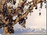 """Вандалы спилили """"обувное дерево"""" в Неваде"""