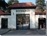 Пол бегемота Фунтика скрыли для рекламы зоопарка