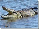 Днепропетровскому крокодилу Гене сделают операцию