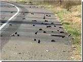 Ученые наконец нашли объяснение массовой гибели птиц