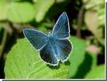 Биологи подтвердили непризнанную гипотезу Набокова о бабочках