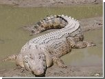 Австралийская семья обнаружила в гостиной крокодила