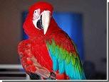 Попугая-сквернослова отправили на языковые курсы