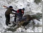 Австрийский олень свалился в водопад