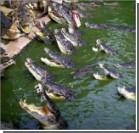 15 тысяч крокодилов сбежали из фермы в реку Лимпопо