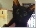 Первым слушатеелм новых песен MGMT стал котенок