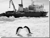«Академик Шокальский» сам выбрался из ледового плена