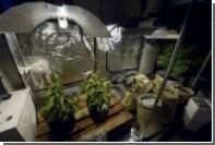 В калифорнийском мебельном магазине нашли плантацию марихуаны