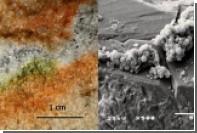 Антарктические грибы смогли пережить в космосе марсианские условия