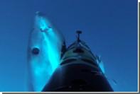 Атаки акул на железных тюленей сняли на видео