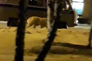 Уральские полицейские выгуляли собаку из машины