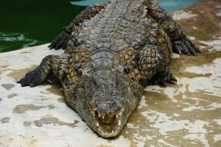 Крокодилы убили туриста в Зимбабве