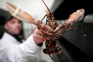 Правительство Швейцарии отстояло право омаров на достойную смерть