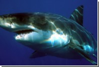 Жертва акулы решила еще раз увидеть хищников перед смертью