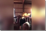 Фермер снял на видео «огненный пар» из пасти альпаки