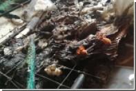 Сотни мерзнувших дорогих тарантулов зажарились под электроодеялом