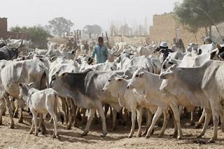 Кочевники-мусульмане устроили резню оседлым крестьянам-христианам в Нигерии