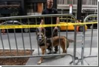Американец покусал полицейскую собаку во время ареста
