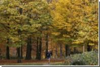 Бельгийцы решили озеленять парки с помощью мертвецов