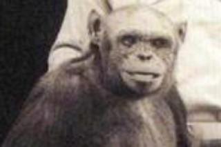 Рассказано о создании гибрида человека и обезьяны