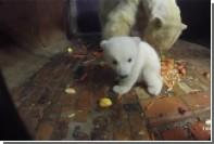 Трапезу белых медведей в берлинском зоопарке сняли на видео