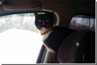 Уральский кот в сапогах и комбинезоне отправился к Байкалу
