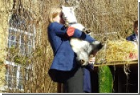 Британская школа завела карликовых коз для воспитания учеников
