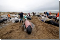 Выбросившихся на берег в Новой Зеладии дельфинов вскрыли из-за угрозы взрыва