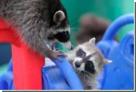 В Екатеринбургском зоопарке открыли курс енототерапии