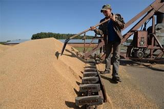 Минсельхоз понадеялся сдержать стремительное падение цен на зерно