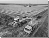Опасность отмены санкций для российских аграриев сильно преувеличена