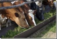 Минсельхоз предложил отказаться от ускоренного импортозамещения мяса и молока