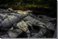 Кости живших 3 тысячи лет назад крокодилов нашли в Китае