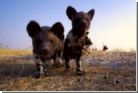 Внутренности роботизированных животных-шпионов показали на видео