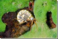 В Марианской впадине обнаружили ядовитые отходы