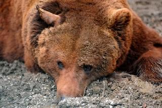 Двухметровый американец избил медведя за нападение на его собаку