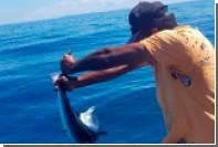 Рыбак заборол акулу после кражи его добычи