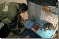 Енотиха заставила спасателей два часа вызволять ее из вентиляции