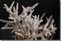 Появились подробности ареста россиянок за хранение кораллов в Таиланде