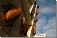 Похитителям 500 живых тараканов пригрозили тюрьмой