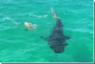 Акулы попытались съесть черепаху и потерпели фиаско